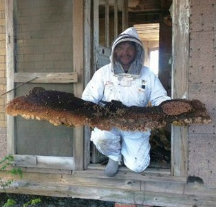 The World's Largest Honeycomb