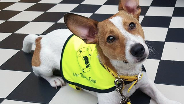 A therapy dog wearing a yellow vest. Source: https://blog.pawedin.com/dogs/a-day-in-the-life-of-a-therapy-dog/