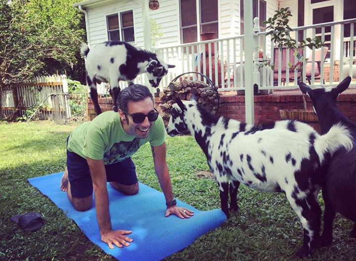 photo+creds%3A+%40summervillegoatyoga+on+instagram