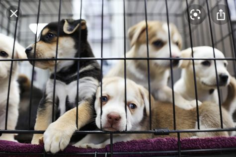 The Fight for Animal Shelters