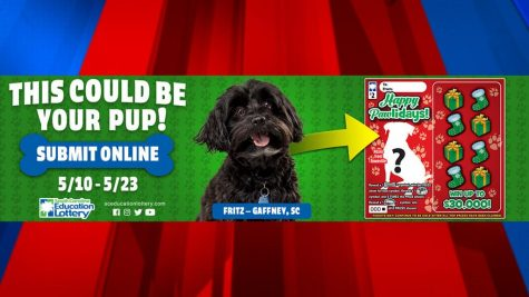 Dogs Get a Chance to be on Lottery Tickets